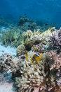 Free Red Sea Anemone Fish Stock Photo - 13852900