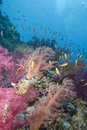 Free Vibrant Soft Corals Stock Photography - 13853032