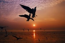Free Dramatic Silhouettes Seagull Royalty Free Stock Image - 13851016