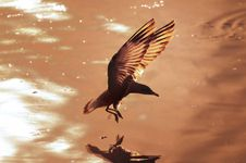Free Dramatic Silhouettes Seagull Royalty Free Stock Image - 13851026
