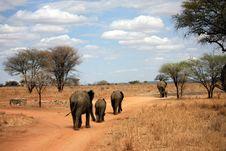 Free Elephant Family Royalty Free Stock Images - 13851609