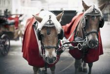 Free Two Horse Driven Carriage Stock Photography - 13851642