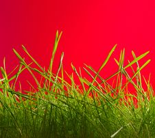 Free Grass Royalty Free Stock Photos - 13851798