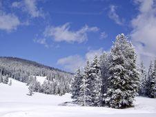 Free Snowy Hillside Royalty Free Stock Photos - 13851968
