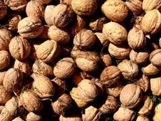 Free Walnut Texture Background Royalty Free Stock Image - 13852056