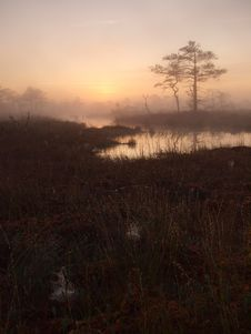Classical Marsh Landscape, Early Morning Royalty Free Stock Photography