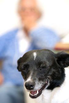 Dog & Gran