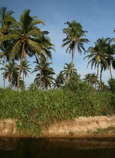 Free Coconut Palms And Water Royalty Free Stock Images - 13852749