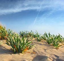 Free Sand Stock Image - 13852831