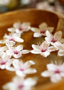 Free Flowers Of Cherry Branch In Water Royalty Free Stock Images - 13853349
