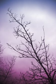 Bare Tree Branches And Clouds Royalty Free Stock Images