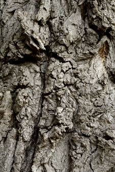 Free Tree Bark Stock Images - 13853894