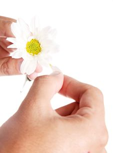 Free White Petals Stock Image - 13854321