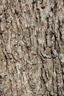 Free Tree Bark I Royalty Free Stock Photo - 13856375