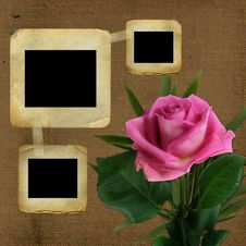 Free Old Slides For Photo With Pink Rose Royalty Free Stock Photo - 13856715