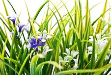 Free Grass And Flowers Royalty Free Stock Photography - 13856967