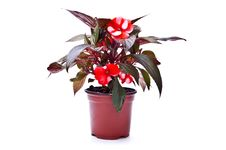 Free Flowerpot Stock Photo - 13856970