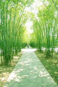 Free Bamboo Shade Footpath Stock Photography - 13856972