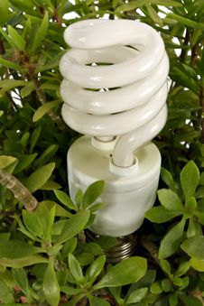 Free Compact Fluorescent Light Bulb Stock Image - 13857611