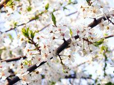 Free Spring Royalty Free Stock Image - 13857866