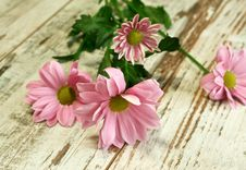 Free Beautiful Chrysanthemum Flower On Old Wooden Stock Photos - 13858483