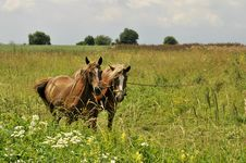 Free Horses-1 Stock Images - 13859024