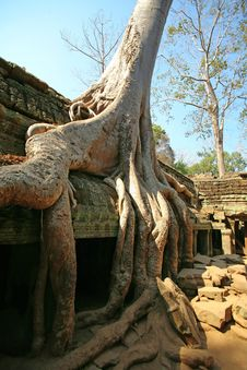 Free Cambodia S Temple Of Ta Prohm In Angkor Wat Stock Photos - 13859153