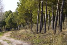 Free Forest With Rural Way Stock Image - 13859291