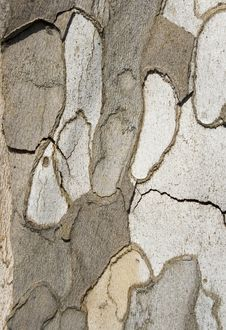 Plane Tree Bark Close Up Royalty Free Stock Images