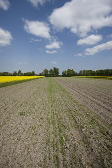 Free Yellow Oilseed Rape Stock Photography - 13860362