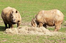 Free Two Nepal Rhinos Eating In A Grass Field Stock Photos - 13860443