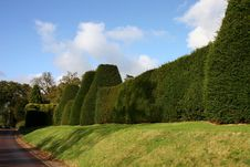 Free Sculptured Hedgerow Stock Image - 13861401