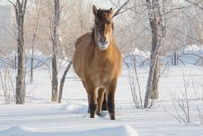 Free Horse On Snow Stock Photo - 13861710