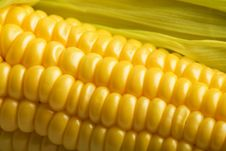 Free Macro Of Fresh Maize Royalty Free Stock Photo - 13864355