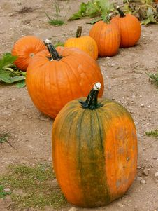 Free Pumpkins All In A Row Royalty Free Stock Image - 13865026
