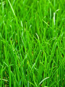 Free Spring Grass Royalty Free Stock Photos - 13866288