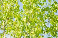Free Sunny Green Leaves Of A Tree Stock Images - 13866764