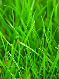 Free Spring Grass Stock Photo - 13867160