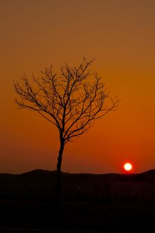 Free Lone Tree Against Orange Sky Royalty Free Stock Photography - 13867287