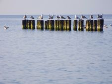 Free Sea. Breakwater And Sea-gulls Stock Photography - 13868092