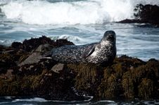 Free Seal Royalty Free Stock Images - 13870079