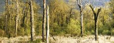 Free Spring Marsh Panorama Stock Image - 13870321