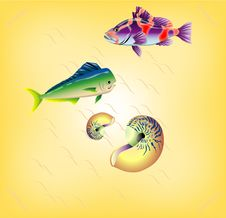 Free Fish Royalty Free Stock Images - 13871569