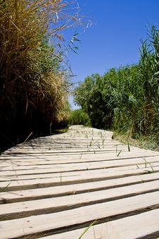 Free Azraq Oasis Boardwallk Stock Photo - 13875300