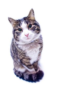Cat Gazing Stock Images