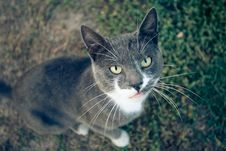 Free Interesting Cat Stock Photos - 13875443