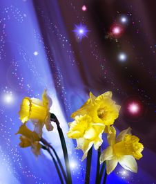 Free Narcissuses And Stars Royalty Free Stock Image - 13875646