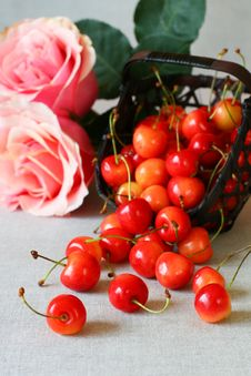 Free Fresh  Cherries Royalty Free Stock Image - 13876306