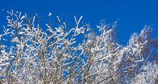 Snow Covered Branches In Winter Stock Photography