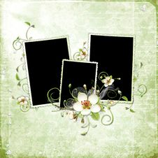 Green Spring Frame With Apple Tree Flowers Royalty Free Stock Image